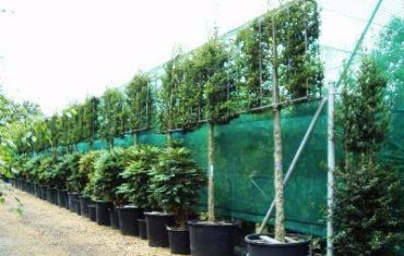 Wholesale Plants & Trade Services from Beechside Nursery
