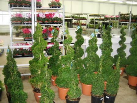 Topiary Hire from Beechside Nursery & Beechside Group