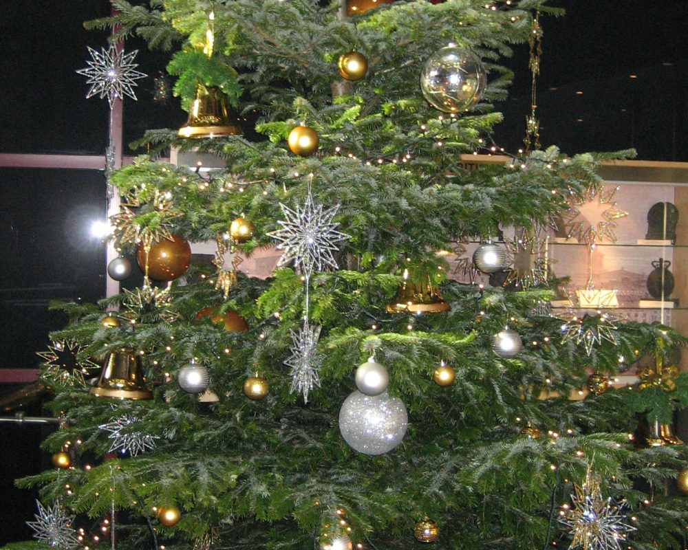 Christmas Trees & Displays - Beechside Group | Beechside Nursery ...